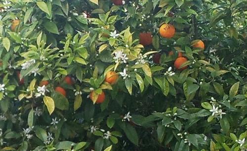 owoce3